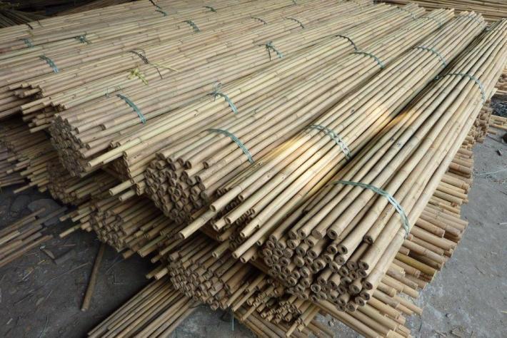 Tonkin Bambusstangen vor der Verschiffung CONBAM Bambushandel Webshop