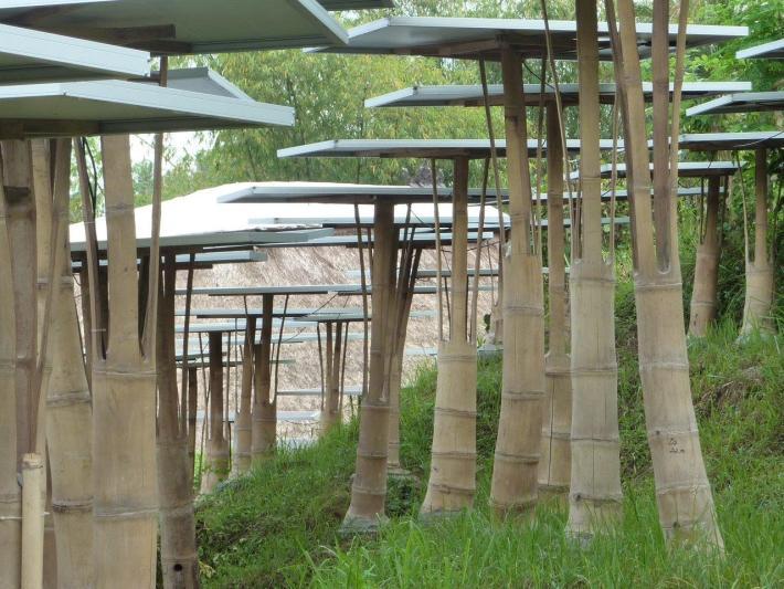 Bambus-Tragkonstruktion für Solarpanles aus Bambusstangen CONBAM