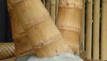 Traditionelle Seilbindung Fur Bambus Verbindungen Bambusexperte
