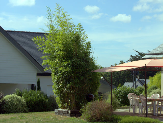 Bambus Sichtschutz Auf Terrasse Balkon Bambusheckende