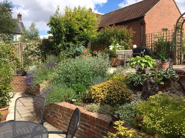 Garden update, Dorset