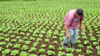 Resultado de imagen de dedicada a la agricultura de subsistencia,EN MAURITANIA
