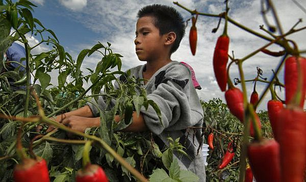 Improving Conditions For Mexican Farmworkers The How Is