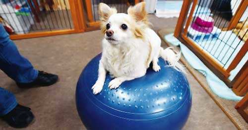 Calming signals, dog language, escalation ladder, canine stress