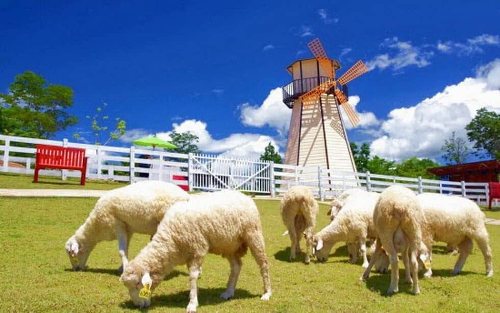 Swiss Sheep Farm at Cha-am