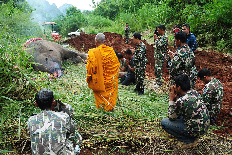 Park officials pray as a monk chairs a cremation rite for a wild elephant electrocuted in Erawan National Park in Kanchanaburi's Sri Sawat district.