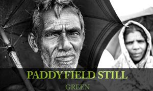 Paddy Field Still Green documentary cover