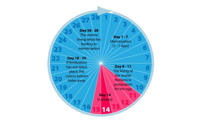 মেয়েদের সেফ পিরিয়ড ও ফারটাইল পিরিয়ড – Safe Period Risk Period