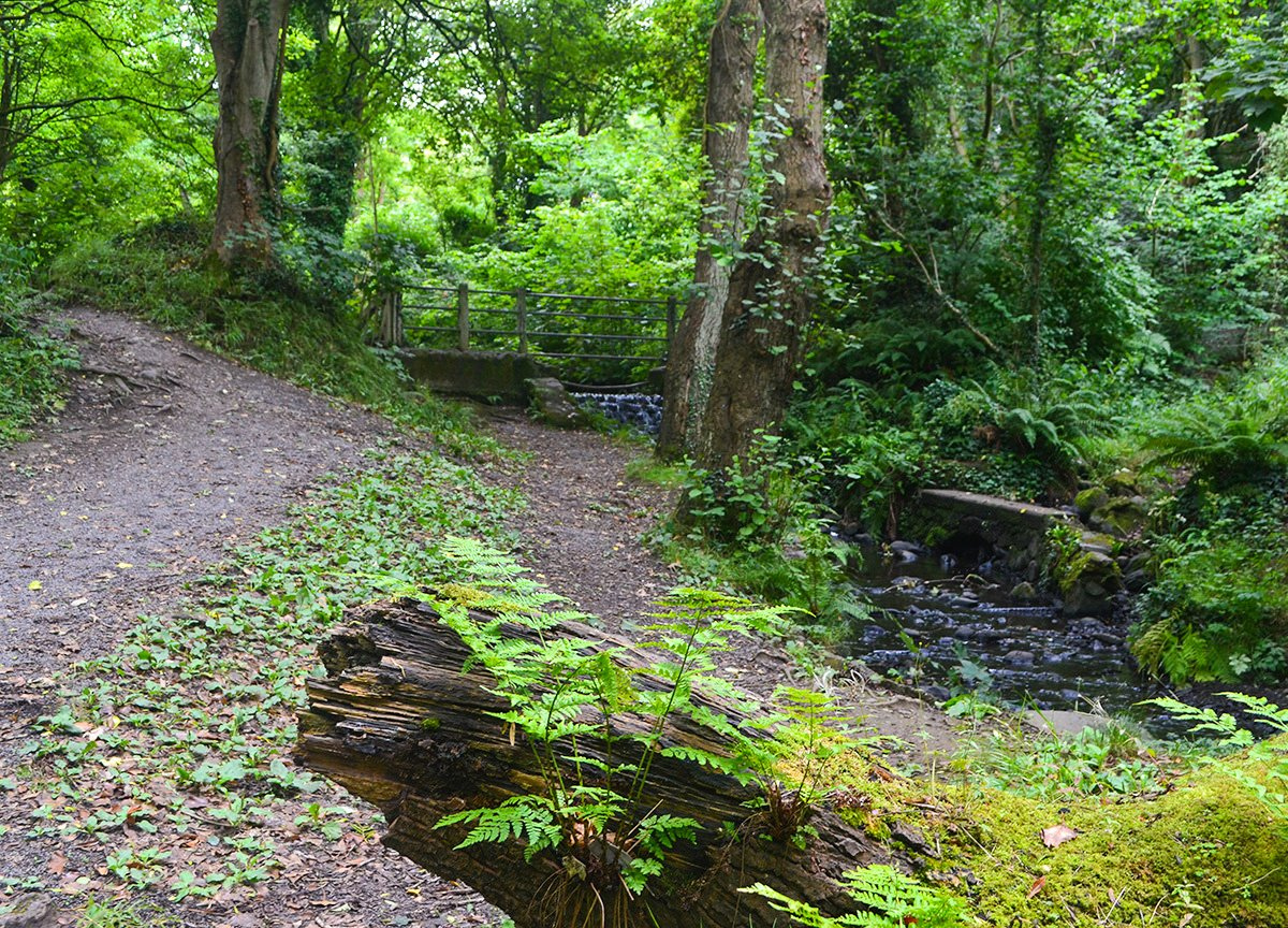Stricklands Glen Bangor Coastal Path in North Down Northern Ireland