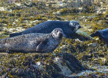 Wild Seals on Beach, Rathlin Island Ferry Day Trip from Ballycastle