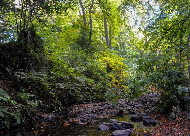 Autumn Crawfordsburn Country Park Bangor Northern Ireland