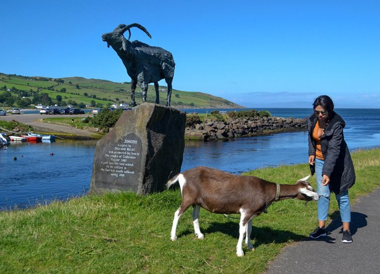 Johann the Cushendun goat, GIants Causeway Coastal Route, Northern Ireland