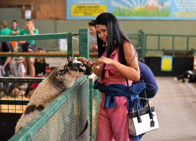 Feeding Sheep at Streamvale Open Farm Belfast Northern Ireland