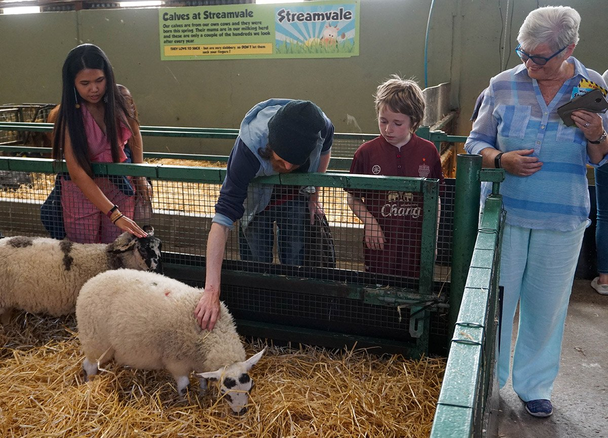 Petting Sheep at Streamvale Open Farm in Belfast Northern Ireland