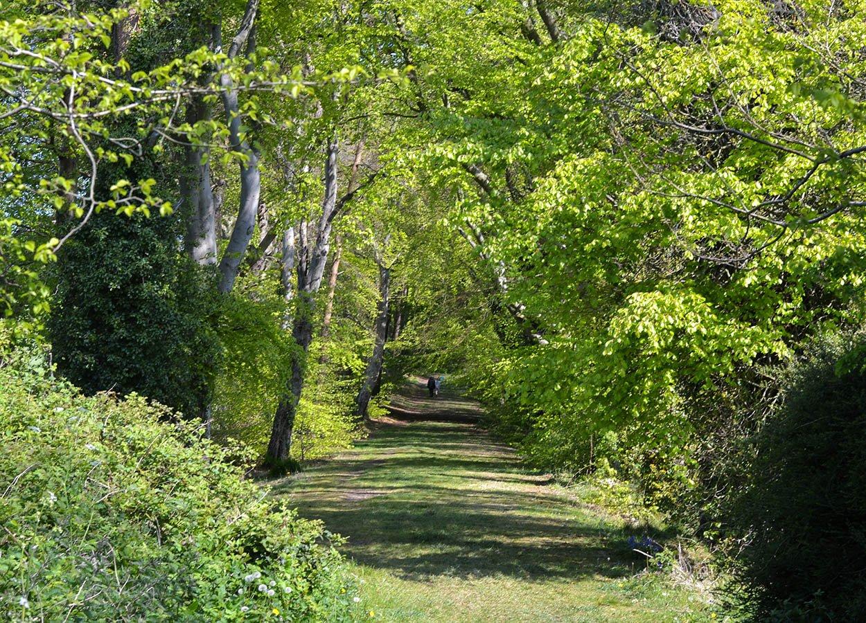 Ker Wood East Pony Trek Stricklands Glen Bangor NI in Spring