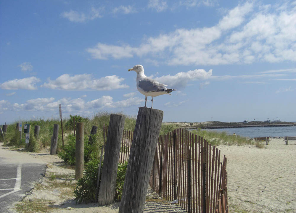 Best Road Trips from new-york-to Long Island and Hampton's
