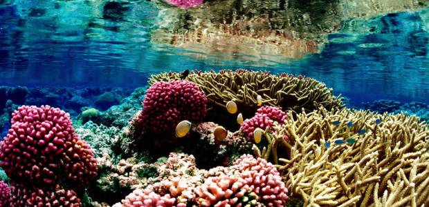 Coral Collapse: Could our world's most wondrous marine environments be about to melt away? We have all heard about the dangers […]