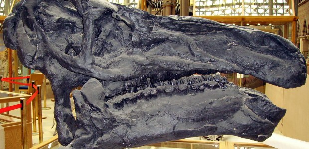 A small fossil found in 2004 is thought to contain mineralized brain tissue of a dinosaur related to the Iguanodon. This is the first time […]