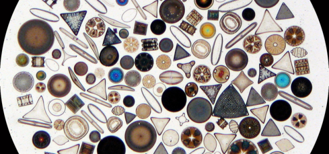 Blog 1: The Secret Lives of Diatoms This summer I'm lucky enough to be interning in a laboratory based at the École Normale Supérieure in […]