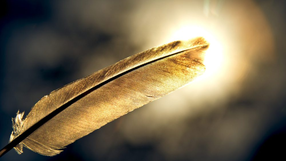 Debunking auto insurance myths, white feather in front of a bright sun.