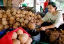 Coconut products' exported worth Rs. 2084cr