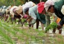 Farm loan defaults up Rs.23000 crore to Rs.83153 crore in a year
