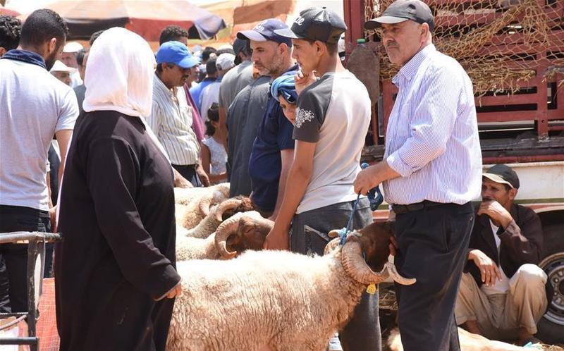 Livestock market in Morocco for Celebrations