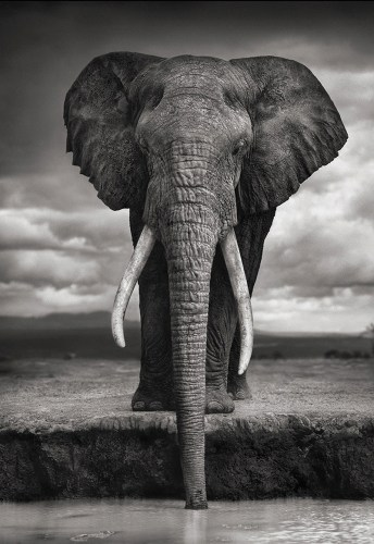 elephant qui boit