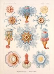 Haeckel, Ernst Kunstformen_der_Natur_Banque de l'image