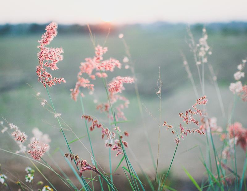 fleurs des champs affiche ©thinkstock banque de l'image