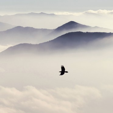 Silhouettes of mountains in the mist and bird flying