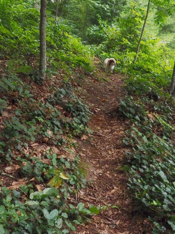 Dog on trail.
