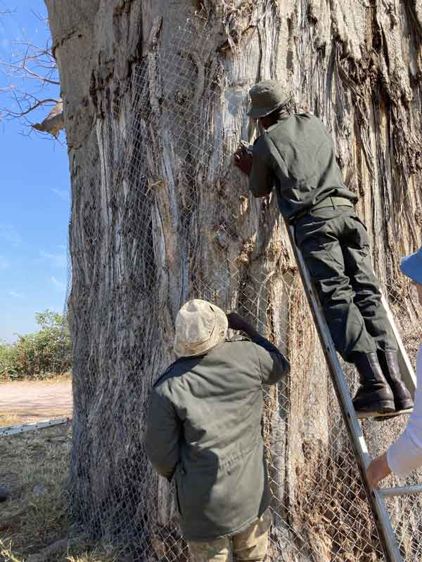 Bao conservation