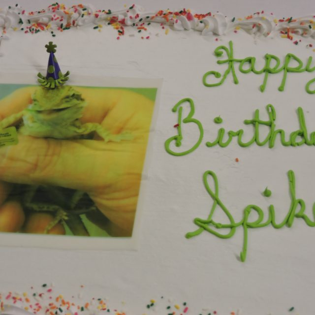spike cake