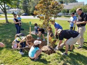 Tree planting outside Coolidge