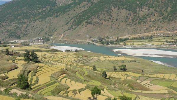 Paysage de rizières à Punakha au Bhoutan