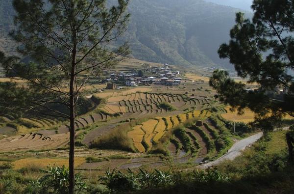 Paysage de rizières au Bhoutan - blog Bar à Voyages