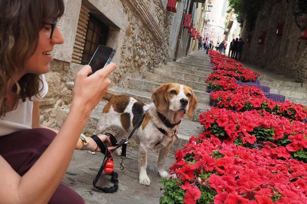 Jeune femme faisant une photo d'un escalier de Gérone recouverts de fleurs