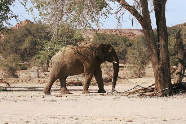 Un éléphant s'abrite à l'ombre - blog Bar à Voyages