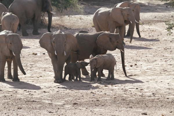 Troupeau d'éléphants en alerte - blog Bar à Voyages
