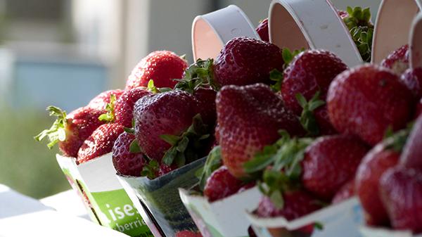 La spécialité de l'Île d'Orléans : les fraises ! Québec