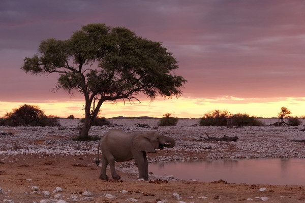 elephant-okaukuejo-namibie-blog-bar-a-voyages