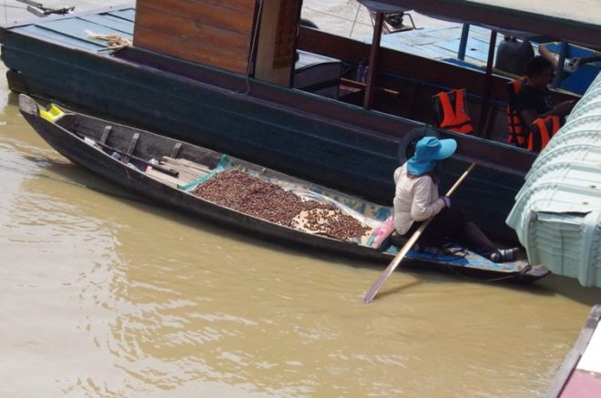 Coquillages Lac Tonlé Sap Cambodge