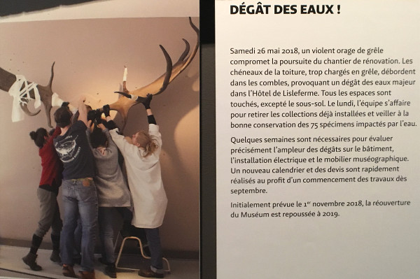 photo du panneau expliquant le dégât des eaux subit par le Muséum de Bordeaux
