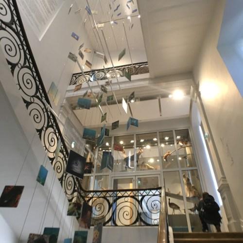 cage d'escaliers du Muséum de Bordeaux