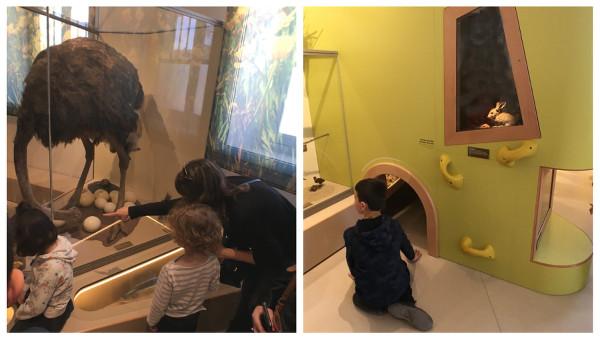 animations pour les enfants au Muséum de Bordeaux