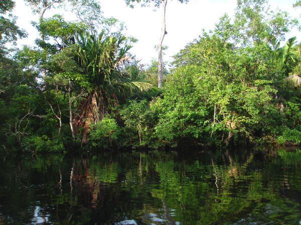 Tortuguero, parc populaire, sur la côte caribéenne du Costa Rica