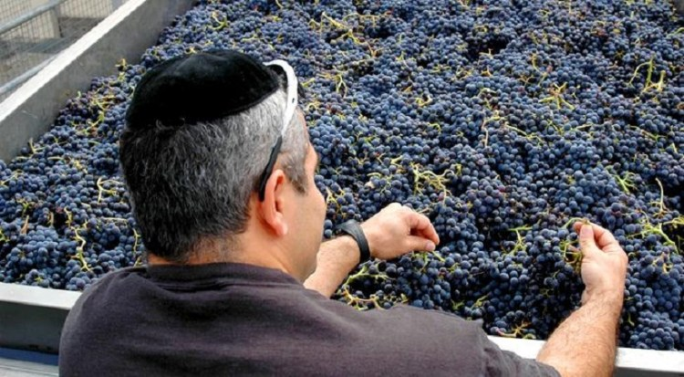 vino kosher in italia