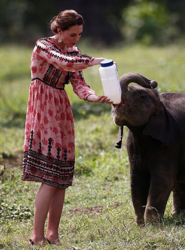 ارتدى كيت ثوب ثوب توب شوب لزيارة مركز لإعادة تأهيل الحياة البرية والمحافظة عليها، حيث أنها تتغذى على الفيل الوليد