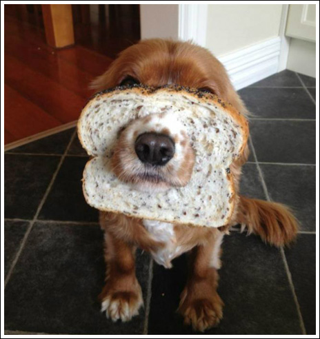 Baraskit Se Dogs With Bread In The Face